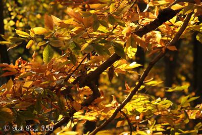 Fall colors in Rock Creek - Washington, DC ... November 8, 2009 ... Photo by Rob page III