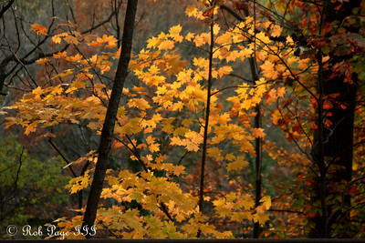 Autumn leaves in Rock Creek Park - Washington, DC ... November 8, 2009 ... Photo by Rob page III