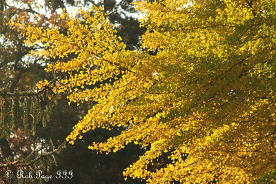 Yellow tentacles reach into the sky - Washington, DC ... November 8, 2009 ... Photo by Rob Page III