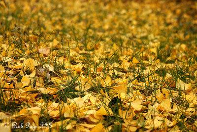 A carpet of grass is replaced - Washington, DC ... November 8, 2009 ... Photo by Rob Page III
