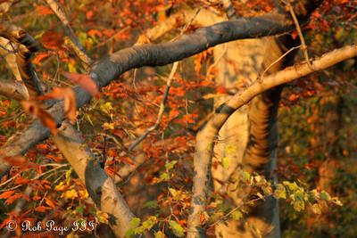Autumn colors in Rock Creek - Washington, DC ... November 8, 2009 ... Photo by Rob page III