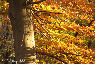 Autumn colors in Rock Creek Park - Washington, DC ... November 8, 2009 ... Photo by Rob page III