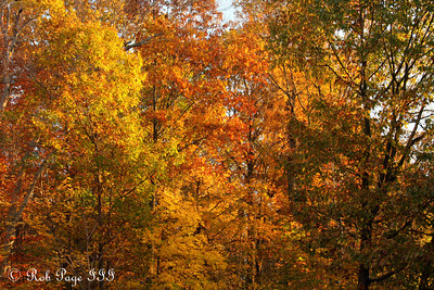 The fall colors of Rock Creek Park - Washington, DC ... November 8, 2009 ... Photo by Rob page III