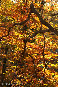 Fall colors in Rock Creek - Washington, DC ... November 8, 2009 ... Photo by Rob page III