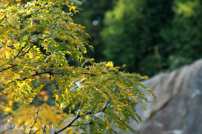 The colors are changing at the National Zoo - Washington, DC ... October 7, 2009 ... Photo by Rob Page III