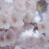 Soft blossom close-up