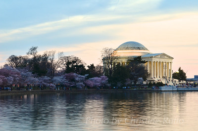 Jefferson Memorial and cherry blossoms at sunset