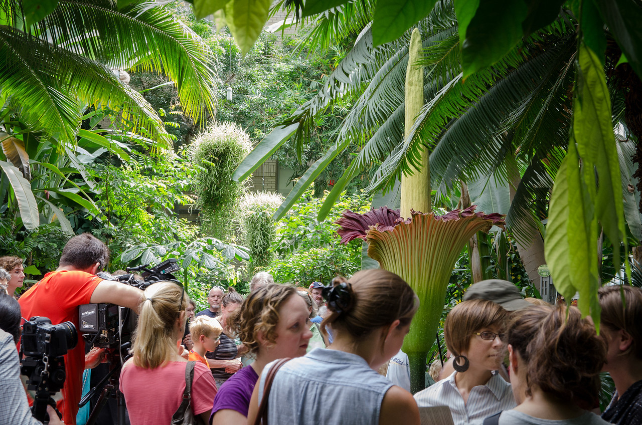 People came from all over to see this rare and huge flower.
