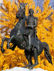 The equestrian statue of General Andrew Jackson at the Battle of New Orleans sits in the center of the Lafayette Park in Washington D.C., one block from the White House. Sculpted in 1853 by Clark Mill, it was the first statue of a person on horseback ever cast in the United States. In the photo, the statue is magnificently framed by bright gold autumn foliage on November 19, 2011. Andrew Jackson (March 15, 1767 - June 8, 1845) was the seventh President of the United States (1829-1837). Jackson became a national hero for his actions in the Battle of New Orleans on January 8, 1815 over the British.