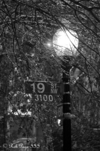 The street lamp highlights the ice on the branches - Washington, DC ... January 28, 2009 ... Photo by Rob Page III