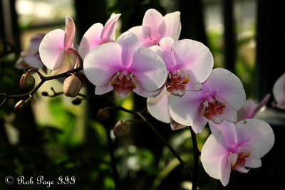 Flowers at the U.S. Botanical Gardens - Washington, DC ... January 23, 2011 ... Photo by Rob Page III