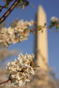 The Washington Monument - Washington, DC ... April 13, 2015 ... Photo by Rob Page III