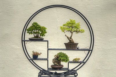 A tree display at the National Bonsai and Penjing Museum at the U.S. National Aroboretum in Washington, D.C. on Tuesday, August 18, 2015. Copyright 2015 Jason Barnette
