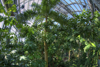 Lush growth inside the towering United States Botanical Garden in Washington, D.C. on Saturday, August 15, 2015. Copyright 2015 Jason Barnette