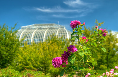 Blooming flowers outside the United States Botanical Garden in Washington, D.C. on Saturday, August 15, 2015. Copyright 2015 Jason Barnette