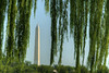 The Washington Monument framed by a weeping willow tree in Washington, D.C. on Monday, August 17, 2015. Copyright 2015 Jason Barnette
