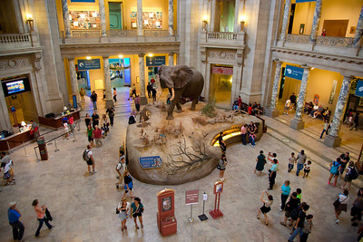 National Museum of Natural History rotunda