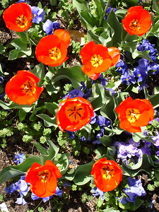 Flowers outside the Basilica of the National Shrine of the Immaculate Conception - Washington, DC ... April 11, 2006 ... Photo by Rob Page III