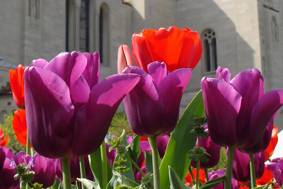 Flowers in front of the Basilica of the National Shrine of the Immaculate Conception - Washington, DC ... April 11, 2006 ... Photo by Rob Page III