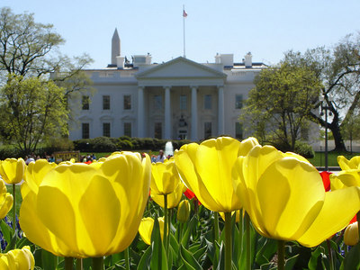 Flowers along Lafayette Park in front of the White House - Washington, DC ... April 10, 2006 ... Photo by Rob Page III