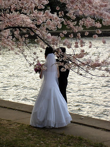 A wedding under the cherryblossoms - Washington, DC ... April 1, 2006