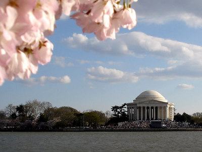 Cherryblossoms and the Jefferson - Washington, DC ... April 1, 2006
