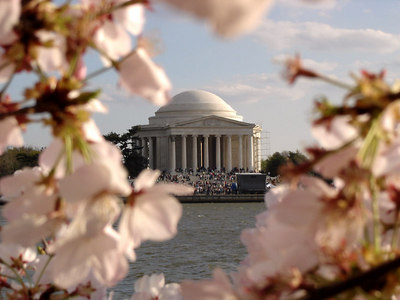 Cherryblossoms and the Jefferson Memorial - Washington, DC ... April 1, 2006