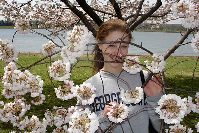 Emily plays with some of the cherry blossoms down by the Potomac - Washington, DC ... March 31, 2007 ... Photo by Rob Page III