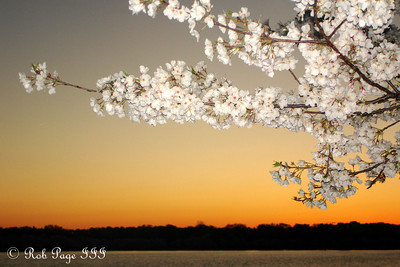 Sunset and the cherry blossoms - Washington, DC ... April 2, 2007 ... Photo by Rob Page III