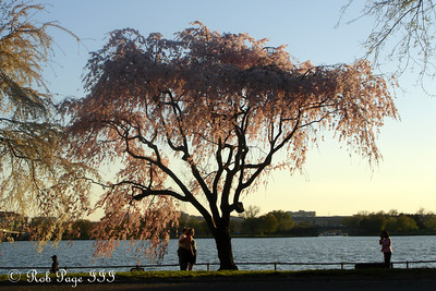 Springtime along the Potomac River - Washington, DC ... April 2, 2007 ... Photo by Rob Page III
