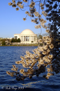 The Jefferson Memorial and the cherry blossoms - Washington, DC ... April 2, 2007 ... Photo by Rob Page III