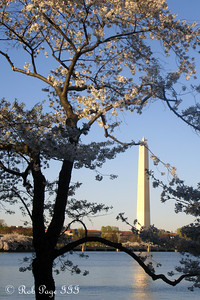 The cherry blossoms are out - Washington, DC ... April 2, 2007 ... Photo by Rob Page III
