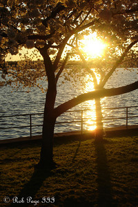 The sun sets behind the cherry blossoms along the Potomac - Washington, DC ... April 2, 2007 ... Photo by Rob Page III