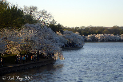 The cherry blossoms along the tidal basin - Washington, DC ... April 2, 2007 ... Photo by Rob Page III