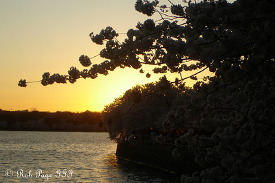 Sunset along the tidal basin - Washington, DC ... April 2, 2007 ... Photo by Rob Page III