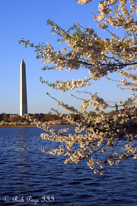 The Washington Monument and the cherry blossoms - Washington, DC ... April 2, 2007 ... Photo by Rob Page III