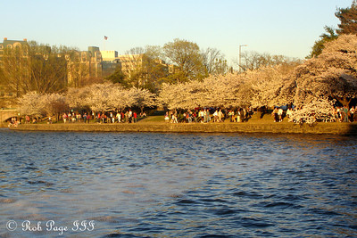 Along the east edge of the tidal basin - Washington, DC ... April 2, 2007 ... Photo by Rob Page III