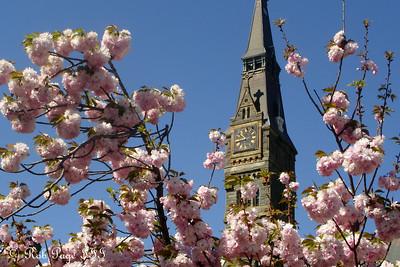 Healy Clocktower - Washington, DC ... April 21, 2007 ... Photo by Rob Page III