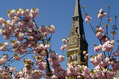 Healy Clocktower - Washington, DC ... April 21, 2007 ... Photo by Rob Page III