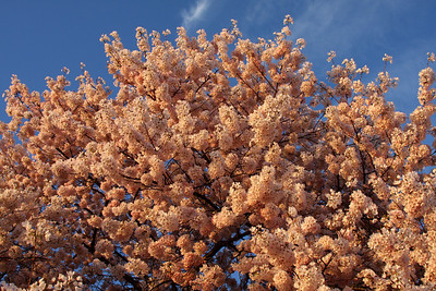 The cherry blossoms - Washington, DC ... April 2, 2008 ... Photo by Rob Page III