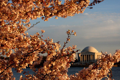 Cherry Blossoms - Washington, DC ... April 2, 2008 ... Photo by Rob Page III