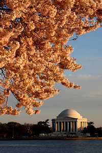 The cherry blossoms erupt the day's final rays of sun - Washington, DC ... April 2, 2008 ... Photo by Rob Page III