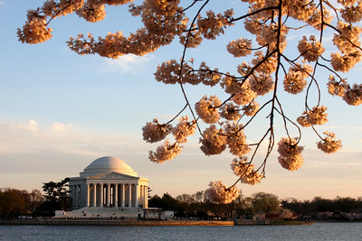 The Jefferson and the cherry blossoms - Washington, DC ... April 2, 2008 ... Photo by Rob Page III