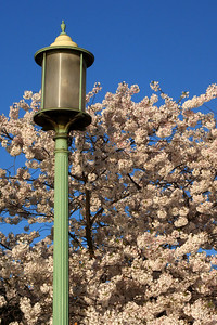 A DC lamppost - Washington, DC ... April 4, 2009 ... Photo by Rob Page III