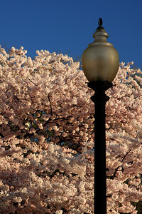 A classic DC lamppost - Washington, DC ... April 4, 2009 ... Photo by Rob Page III