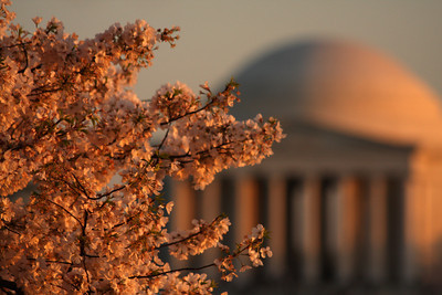 The Jefferson Memorial - Washington, DC ... April 1, 2010 ... Photo by Rob Page III