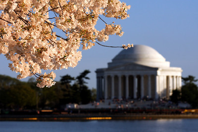 The Jefferson Memorial with the cherryblossoms - Washington, DC ... April 1, 2010 ... Photo by Rob Page III