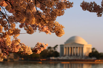 The Jefferson Memorial and the cherryblossoms - Washington, DC ... April 1, 2010 ... Photo by Rob Page III