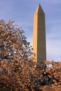 Cherryblossoms and the Washington Monument - Washington, DC ... April 1, 2010 ... Photo by Rob Page III