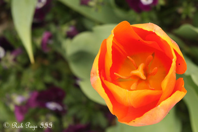 Flowers at the National Arboretum - Washington, DC ... April 1, 2012 ... Photo by Rob Page III